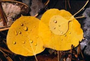medium_automne1